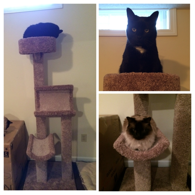 A tower of kitties