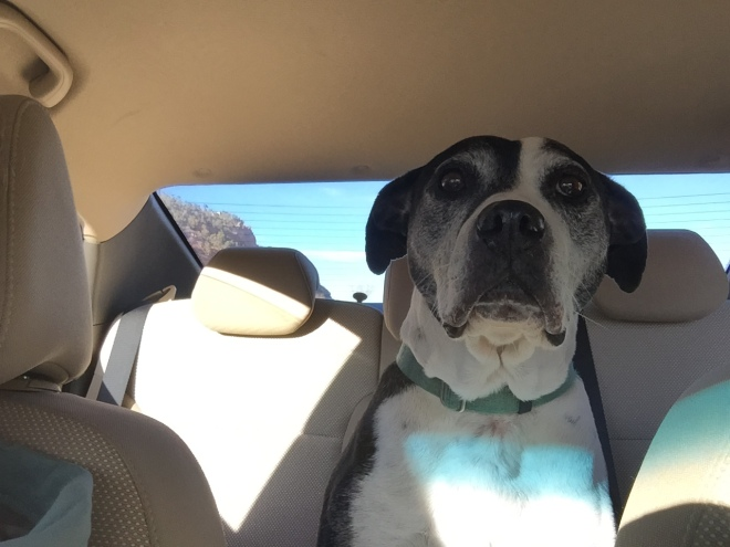 A polite passenger